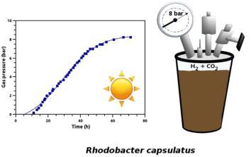 Rhodobacter capsulatus for biohydrogen